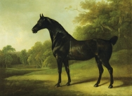 A Bay Horse in a Wooded Landscape